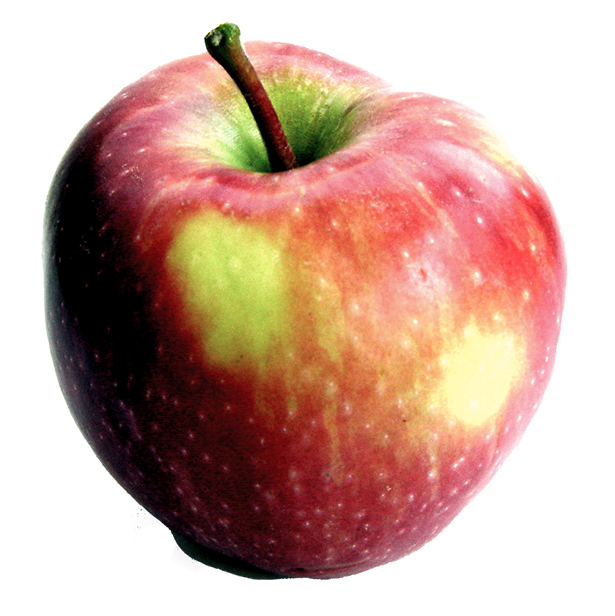 Apple-onwhite-healthy